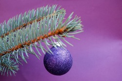 close-up of a shiny round purple Christmas toy hanging on a blue Christmas tree on a lilac background . winter holiday