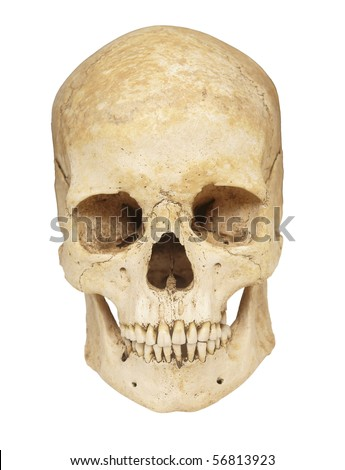 close up of a skeleton on white background with clipping path