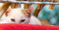Close up of a small white cat resting on a red cushion