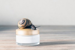 Close up, of a snail, streaking towards a jar of skin cream.