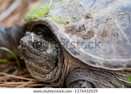 Turtle Shell Tortoise Defense Images And Stock Photos