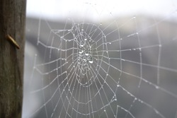Close up of a spiderweb with drops of dew