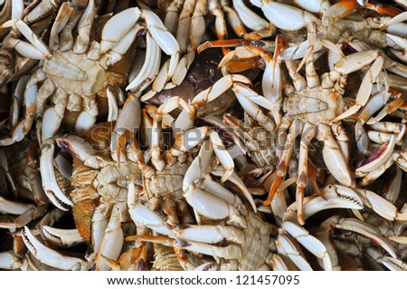 Close-up of a stack of freshly caught Dungeness crab. From the Oregon coast.