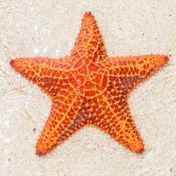 Close-up of a starfish (sea star) near the sandy shore of a tropical beach