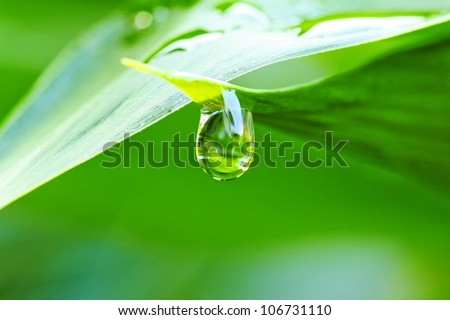 Close up of a water drops on leaves #106731110