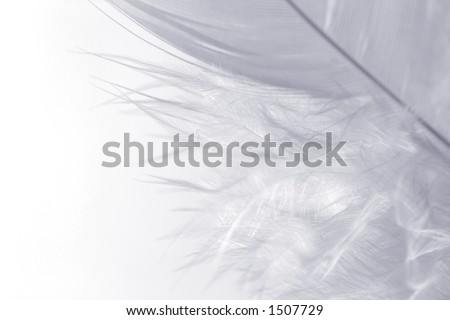 Close-up of a white feather on a white background. Macro photograph: shallow depth of field!