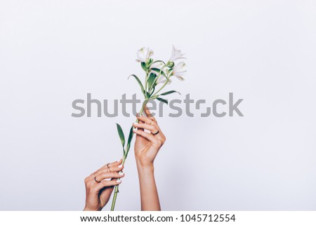 Close-up of a white flower in female hands on a light background