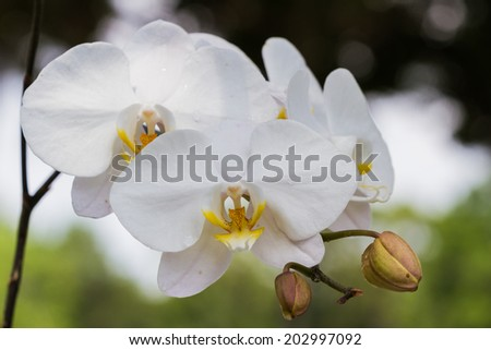 close up of a white orchid with water drops in an outdoor home garden