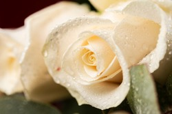 Close-up of a white rose and dewdrops.