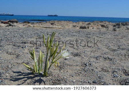 Close-up of a wildflower on Chrissi island against the background of ships far away in the sea