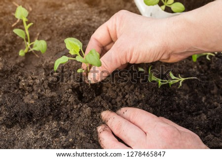 Close up of a woman hands seeding little plants #1278465847