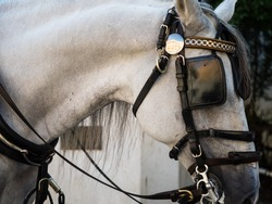 Close up of a working horse, Seville, with reflection from bridle