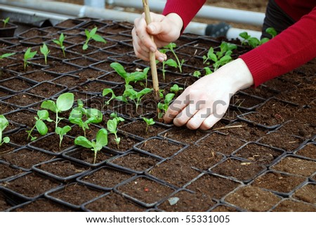 close up of a young woman seeding little plants