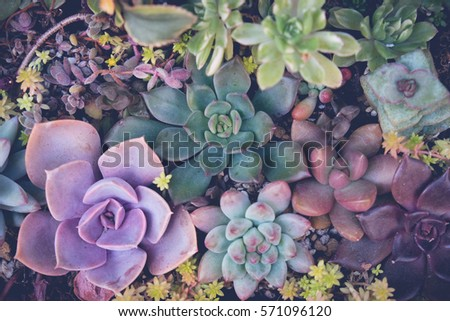 Close up of agave succulent plants, selective focus, toning