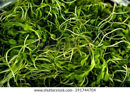 Close up of alfalfa sprouts #291744704