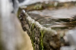Close-up of algae grown in a drainage collector in a stream of waste water.