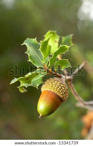 close/up of an acorn in the wood - stock photo