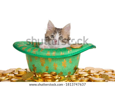 Close up of an adorable Norwegian Forrest Cat kitten sitting in a Saint Patrick's day theme'd green hat with gold shamrocks, surrounded by gold coins. Isolated on white. Foto stock ©