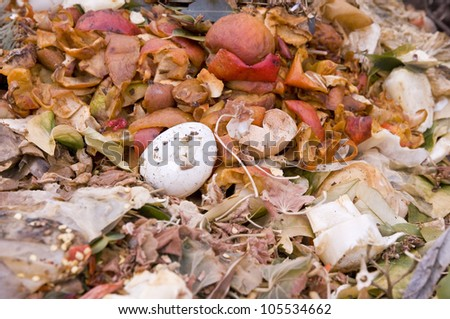 Close up of an Eggshell and Apple Peels in the Kitchen Waste