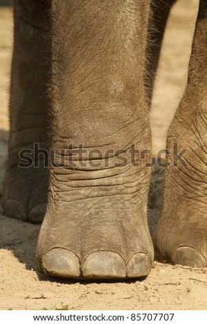 Close up of an elephants paw