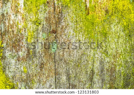 close up of an old rough wood background texture with lichens - stock photo