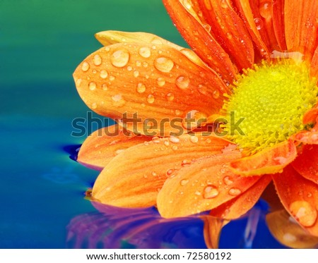 Close-up of an orange flower reflected in rendered water
