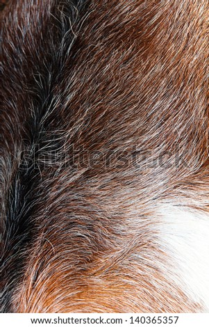 close up of anglo nubain goat wool background