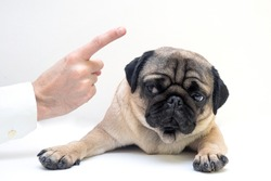 Close-up of angry man hand wagging a finger and scolding her pug dog, punish a dog