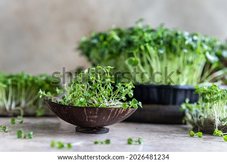 Close up of arugula microgreen. Organic superfood concept. Healthy lifestyle. Selective focus. Сток-фото ©