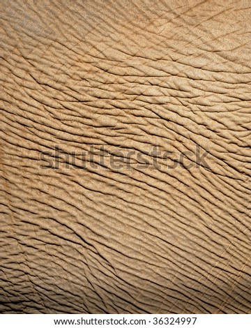 close up of asian elephant skin showing wrinkles, bangkok, thailand. full frame macro old leathery wrinkly hide background