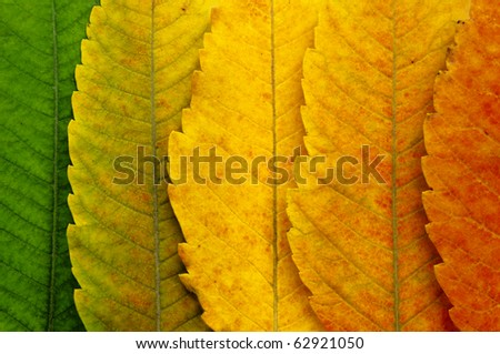 close up of autumn leaves #62921050