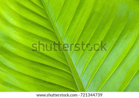 Close-up of Background from a green leaf in bright sunlight