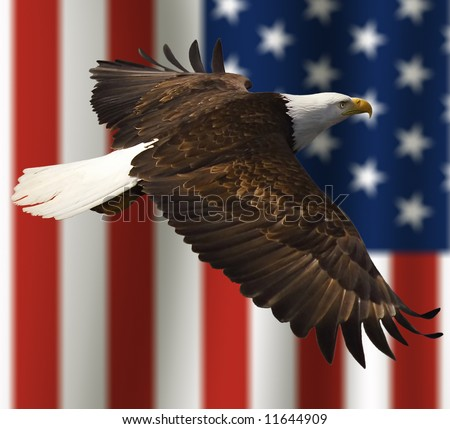 close up of bald eagle flying in front of american flag with vertical stripes and tight depth of field