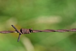 Close up of barbed wire against a green background