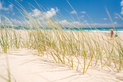 Close up of beach grass at Kirra Beach, Gold Coast, Queensland, Australia.