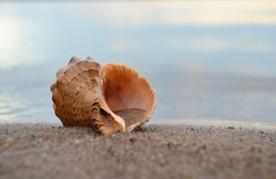 Close up of beach sand with sea shells. Conch shells at the beach, selective focus. Coast background