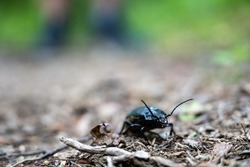 Close Up of Beatle On Trail with low angle