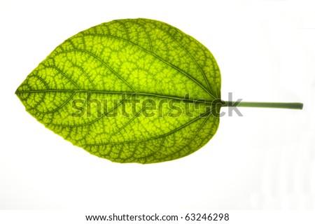Close up of beautiful leaf