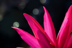 close up of beautiful lotus flower with bokeh background.