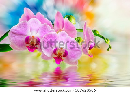 Close up of beautiful plant orchid flower #509628586