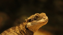 close up of beautiful reptiles in a zoo