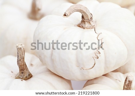 Close up of beautiful white pumpkins. Extreme shallow depth of field. #219221800