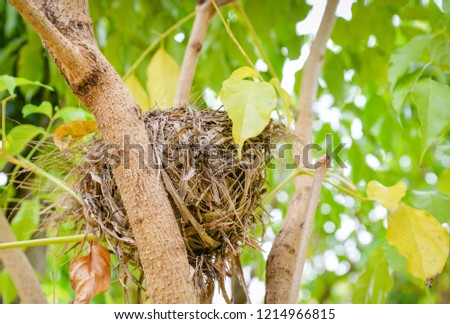 Close up of Bird's nest on tree on nature green background  stock photo