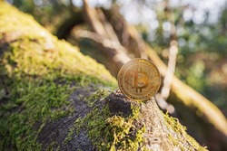 Close-up of Bitcoin on a tree with moss outdoor on green natural background with copy space. Single physical metal gold shining BTC cryptocurrency coin. Environment impact of crypto mining concept