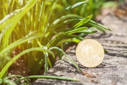 Close-up of Bitcoin on concrete outdoor with green grass natural background. Single gold BTC cryptocurrency coin. Environment impact of crypto mining concept