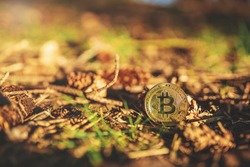 Close-up of Bitcoin on ground in a forest, natural background with copy space. Single physical metal gold shining BTC cryptocurrency coin outdoor with grass, cones, leaves