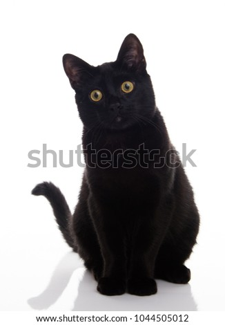 Close up of Black Cat on White