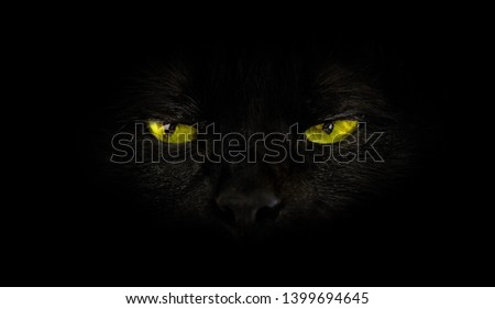 close up of black cat with yellow eyes on black background. Horror atmospheres and halloween concept. Look panther and witch eyes. Bad luck and superstition concept. Photo stock ©