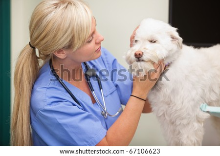 Close-up of blond female veterinarian examining dog