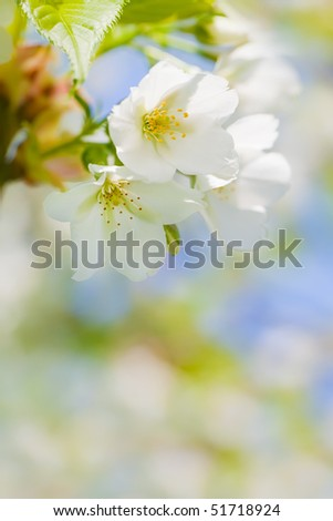 Close up of blooming flowers with space for text uder it